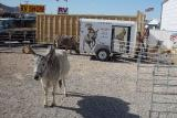 THE BURRO SHOW WAS GREAT