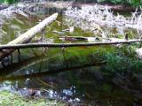 a pond near cold springs