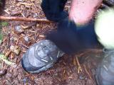 tying her shoe