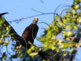 15 SEP 10 Dad Eagle