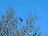 05 MAR 08 JUST A JET COMING THRU THE TREES