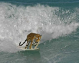 Florida Surfers
