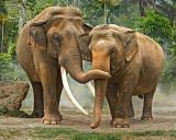 Elephants 231.jpg