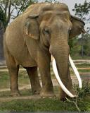 Elephants 280.jpg