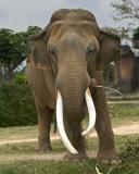 Elephants 282.jpg