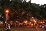 Banyan Tree-Lahaina