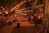 Banyan Tree lit for Christmas