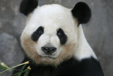 Yang Yang - 12 year old male