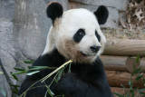 Ang - Yang Yang - 12 year old male