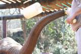 Ang - Elephant