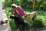 Angela feeding breakfast treat to Minnie, Marty & Muki