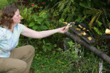Angela feeding an Aracaris bananas