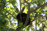 Howley Monkey