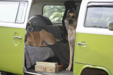 The dogs think they are going for a ride in the VW Kombi
