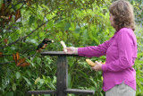 Angela feeding an Aracari
