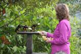 Angela feeding Aracaris