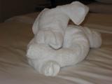 Towel Animal in Cabin