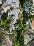 Abstracto natural / Natural abstract