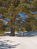 Arbol / Tree