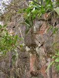 Vegetation in the rock / Vegetación en las rocas