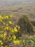 Flowery view / Vista florida