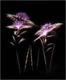 Night Flowers - Fireworks