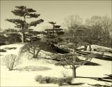 Chicago Botanic Garden Winter_05