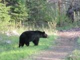 Bears-6.JPG