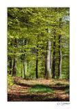 Forêt.jpg