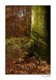 Arbre forêt.jpg
