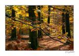 Arbres automne.jpg