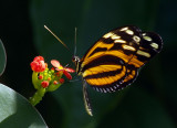 Butterfly-and-Flower.jpg