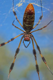 A Bug's Eye View.jpg