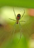 Tiny Spider.jpg