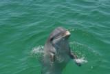 Wild Dolphin.jpg