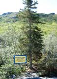 Last Spruce Tree