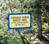 Spruce Tree Sign