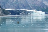 Margorie Glacier with Tufted Puffins
