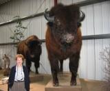 WM Bison