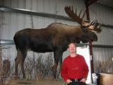 WM Bull Moose