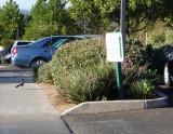Roadrunner at Sedona Timeshare