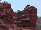 Hawk-shaped Rock