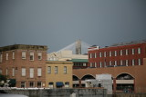 Unexpected sight in Savannah