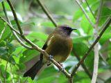 BIRDS NZ.