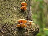 Tree mushrooms.JPG