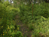 Peveto Woods Trail