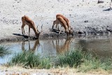 AT OUR WATERHOLE
