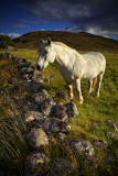 Glen Muick Horseplay