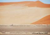 Gemsbock between dunes