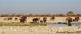 Herd of elephants at Rietfontein waterhole